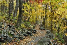Rock-lined trail in Autumn