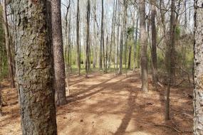 Hole 6 shot through trees