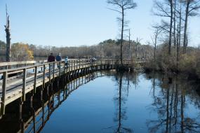 Boardwalk over wetlands