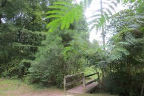 Wooden bridge over small stream