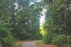 Paved path through trees