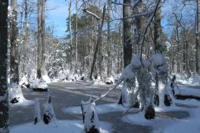 Snow in the swamp