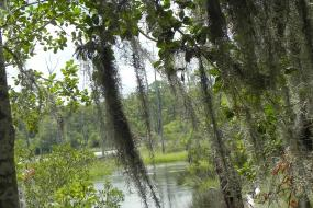 Spanish moss hanging in trees