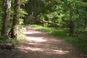 Wide natural trail through the forest