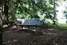 Tree-shaded bench