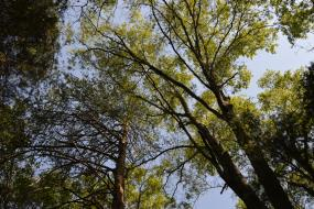 View of the canopy of the forest