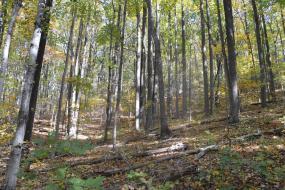 Forested hillside