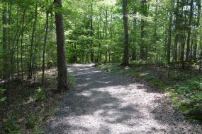 Wide path through the trees