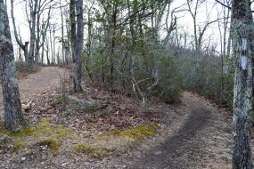 Winding dirt trail through the trees
