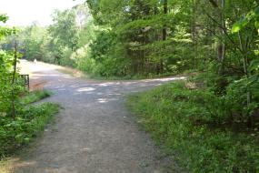 Gravel path along forest edge