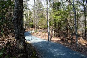 Gravel trail through forest
