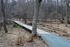 Boardwalk trail over sensitive habitat