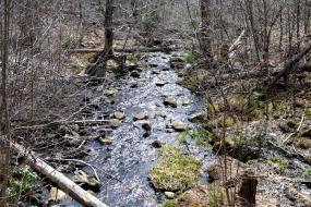 Stony stream