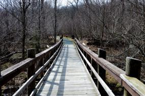 Wooden bridge of stream