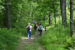 Group hiking down a wooded path