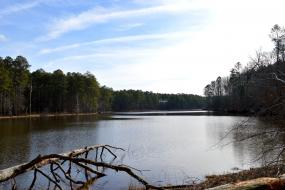 Lake surrounded by pine forest