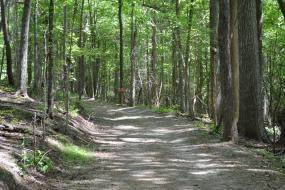 Wide trail through the forest
