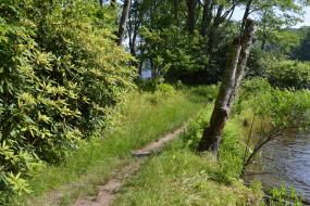 Thin dirt path along the edge of the lake