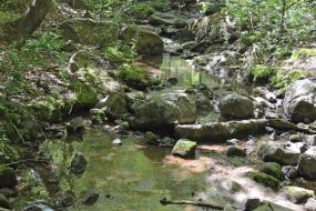 Rocky stream in the forest