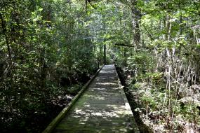 Boardwalk through dense forest