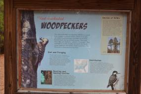 Informational sign about Red-cockaded Woodpeckers