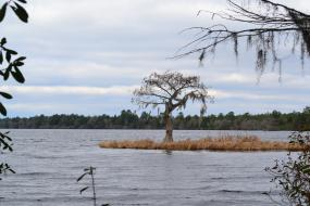 Tree growing on a very small island on Singletary Lake