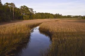 Water winding through salt marsh