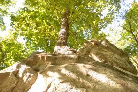 Tree growing on top of boulders