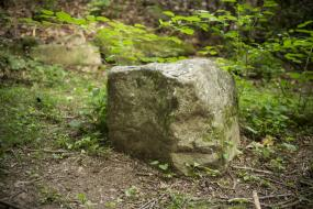 Rock surrounded by vegetation