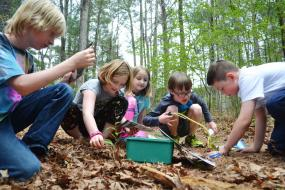 Kids digging through leaf litter to find bugs