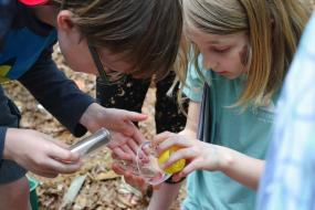Kids putting an insect under a magnifying glass