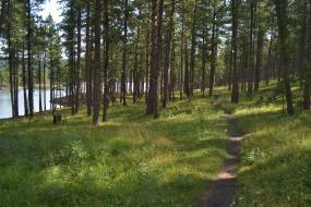 Trail along Pactola Lake shore