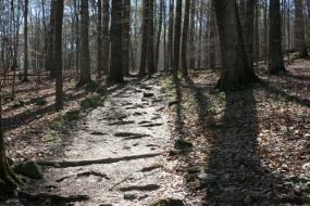 Rocky path through the woods