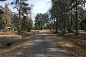 Paved path through woods
