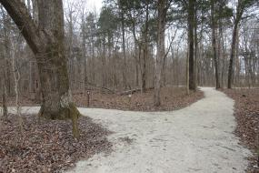 Trail at Picnic Area