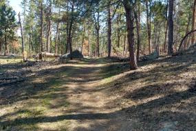Trail through pines