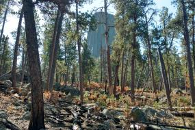 Devils Tower through the trees