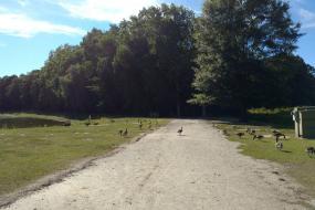Path along lake shore