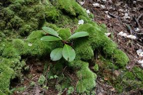 Mossy tree trunk
