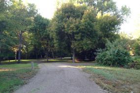 Natural path through trees