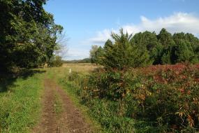 Trail stretching toward a field