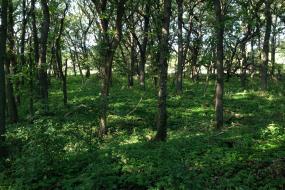 Green vegetation on the forest floor