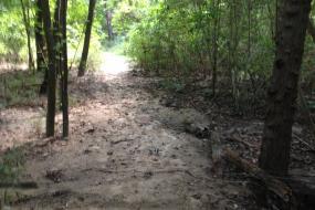 Wet sandy trail through forest