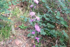 A stalk full of purple flowers