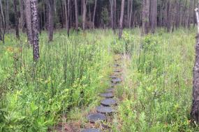 Path along the trail