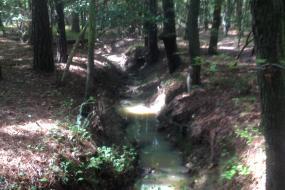 Stream running through the forest
