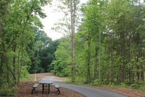 Paved path through park