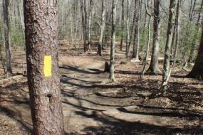 Yellow blaze on a tree beside the trail
