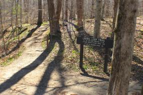 The trail forking around a directional sign
