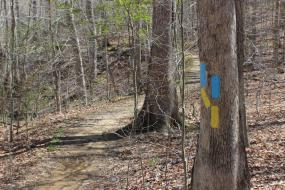 Yellow and blue blazes on a tree
